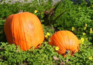 pumpkin-green-1401364